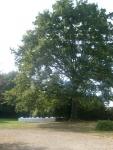 grand-arbre